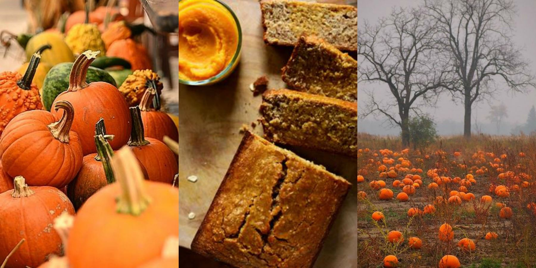 Burlanes Interiors - Pumpkin Recipe and Bakeware Giveaway
